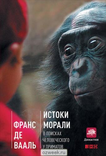 55425107_w640_h640_chimpanzeeobloghka450